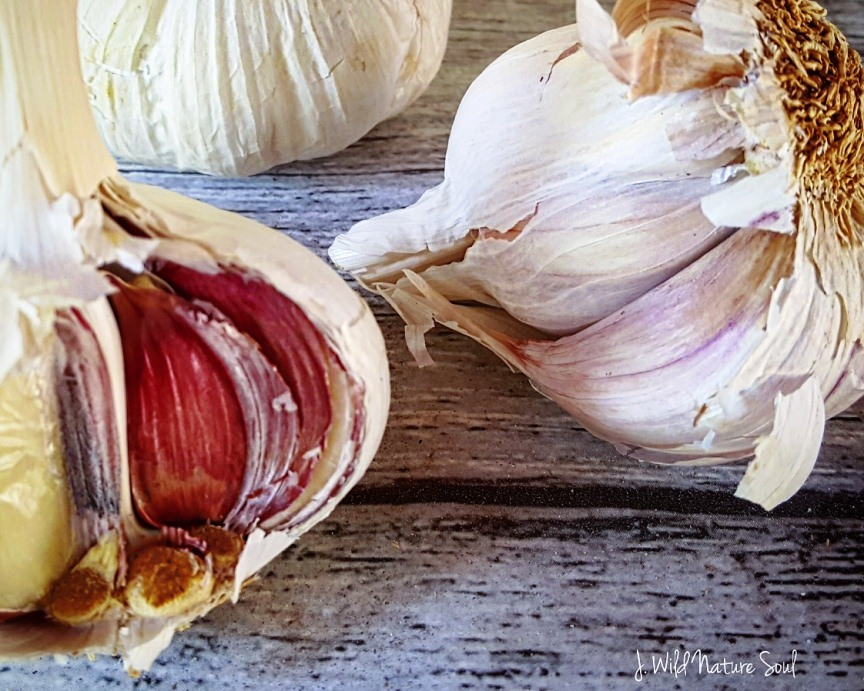 Garlic: a faithful ally for our health. History and uses
