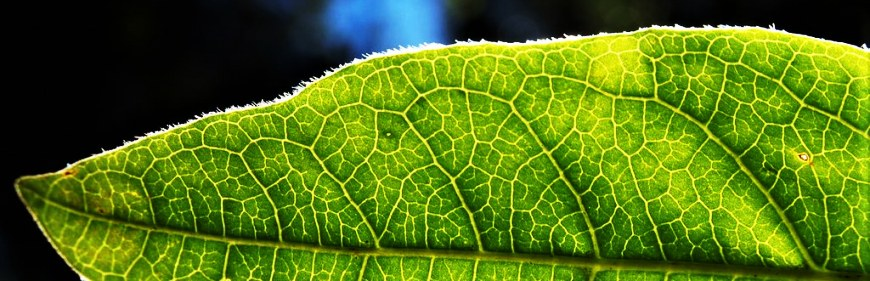 Where to get the better quality water? Chlorophyll photosynthesis